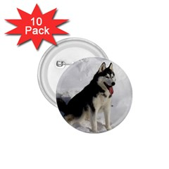 Siberian Husky Sitting in snow 1.75  Buttons (10 pack)