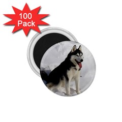 Siberian Husky Sitting in snow 1.75  Magnets (100 pack)