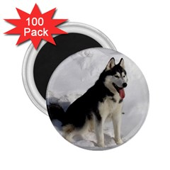 Siberian Husky Sitting in snow 2.25  Magnets (100 pack)