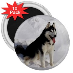 Siberian Husky Sitting in snow 3  Magnets (10 pack)