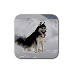Siberian Husky Sitting in snow Rubber Square Coaster (4 pack)