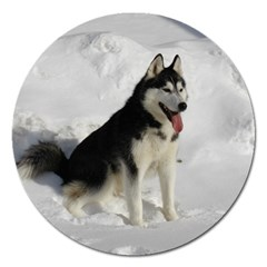 Siberian Husky Sitting in snow Magnet 5  (Round)