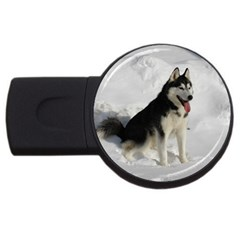 Siberian Husky Sitting in snow USB Flash Drive Round (1 GB)