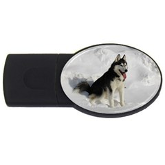 Siberian Husky Sitting in snow USB Flash Drive Oval (2 GB)