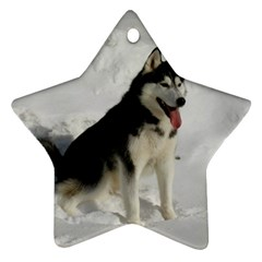 Siberian Husky Sitting in snow Star Ornament (Two Sides)