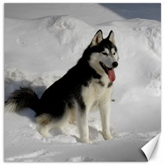 Siberian Husky Sitting in snow Canvas 12  x 12