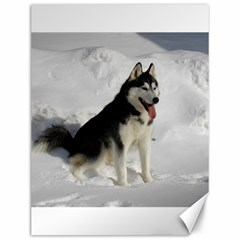 Siberian Husky Sitting in snow Canvas 12  x 16