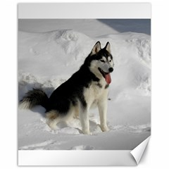 Siberian Husky Sitting in snow Canvas 16  x 20