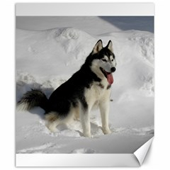 Siberian Husky Sitting in snow Canvas 20  x 24