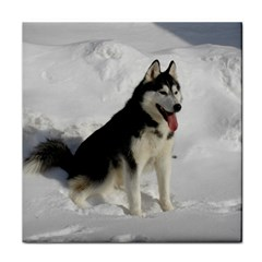 Siberian Husky Sitting in snow Face Towel