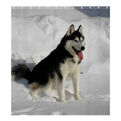 Siberian Husky Sitting in snow Shower Curtain 66  x 72  (Large)