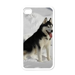 Siberian Husky Sitting in snow Apple iPhone 4 Case (White)
