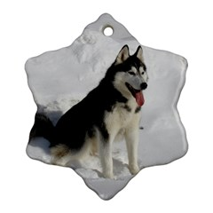 Siberian Husky Sitting in snow Ornament (Snowflake)