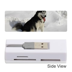Siberian Husky Sitting in snow Memory Card Reader (Stick)