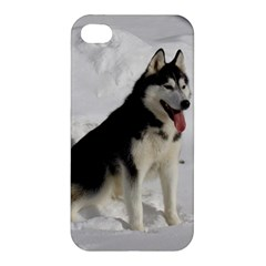 Siberian Husky Sitting in snow Apple iPhone 4/4S Premium Hardshell Case