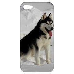 Siberian Husky Sitting in snow Apple iPhone 5 Hardshell Case