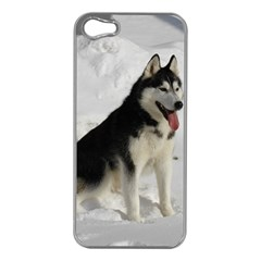 Siberian Husky Sitting in snow Apple iPhone 5 Case (Silver)