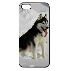 Siberian Husky Sitting in snow Apple iPhone 5 Seamless Case (Black)