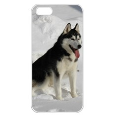 Siberian Husky Sitting in snow Apple iPhone 5 Seamless Case (White)