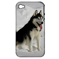 Siberian Husky Sitting in snow Apple iPhone 4/4S Hardshell Case (PC+Silicone)