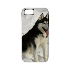 Siberian Husky Sitting in snow Apple iPhone 5 Classic Hardshell Case (PC+Silicone)