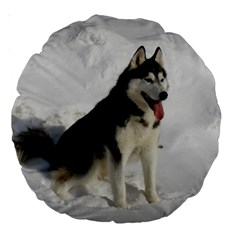 Siberian Husky Sitting in snow Large 18  Premium Round Cushions