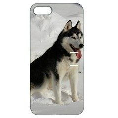 Siberian Husky Sitting in snow Apple iPhone 5 Hardshell Case with Stand