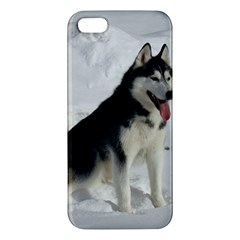 Siberian Husky Sitting in snow Apple iPhone 5 Premium Hardshell Case