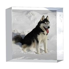 Siberian Husky Sitting in snow 5  x 5  Acrylic Photo Blocks