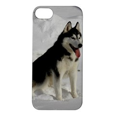 Siberian Husky Sitting in snow Apple iPhone 5S/ SE Hardshell Case