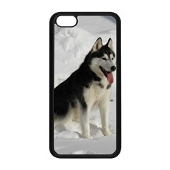 Siberian Husky Sitting in snow Apple iPhone 5C Seamless Case (Black)