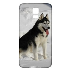 Siberian Husky Sitting in snow Samsung Galaxy S5 Back Case (White)