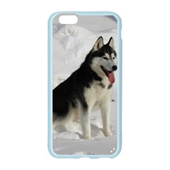 Siberian Husky Sitting in snow Apple Seamless iPhone 6/6S Case (Color)