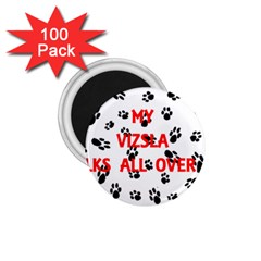 My Vizsla Walks On Me  1.75  Magnets (100 pack)