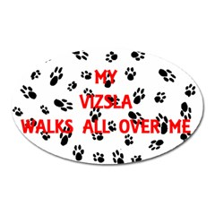My Vizsla Walks On Me  Oval Magnet