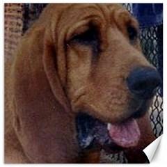 Bloodhound  Canvas 20  x 20