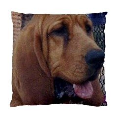 Bloodhound  Standard Cushion Case (Two Sides)
