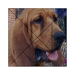 Bloodhound  Acrylic Tangram Puzzle (6  x 6 )