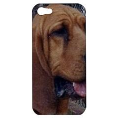 Bloodhound  Apple iPhone 5 Hardshell Case