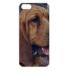 Bloodhound  Apple iPhone 5 Seamless Case (White)