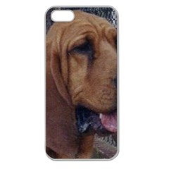 Bloodhound  Apple Seamless iPhone 5 Case (Clear)