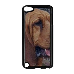 Bloodhound  Apple iPod Touch 5 Case (Black)