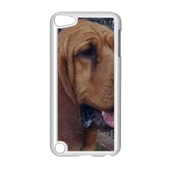 Bloodhound  Apple iPod Touch 5 Case (White)