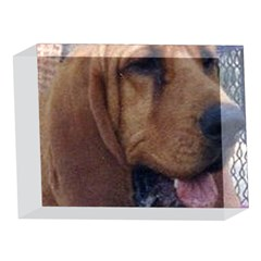 Bloodhound  5 x 7  Acrylic Photo Blocks