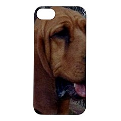 Bloodhound  Apple iPhone 5S/ SE Hardshell Case