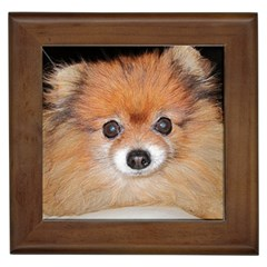Pomeranian Framed Tiles