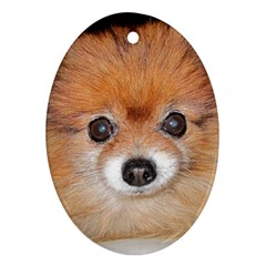 Pomeranian Ornament (Oval)