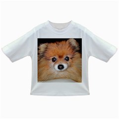 Pomeranian Infant/Toddler T-Shirts