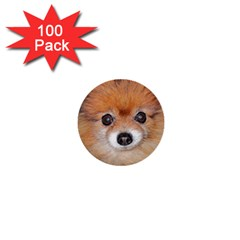 Pomeranian 1  Mini Buttons (100 pack)
