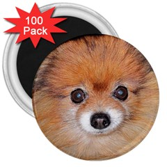 Pomeranian 3  Magnets (100 pack)